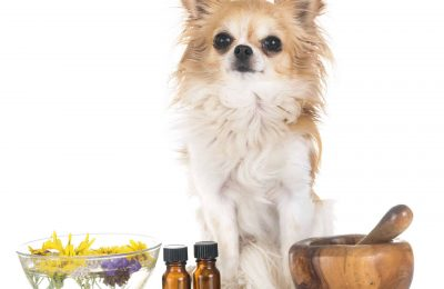 Veterinary-Medicine-Compounding